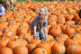 Pumpkin Patch Houston Oil Ranch by The Best Pumpkin Patches Around La Chelsea Robinson Real Estate