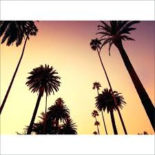 California Palm Trees Wall Mural Imported Quotes