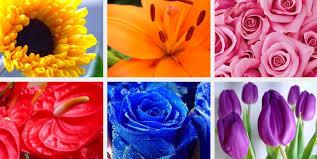 Choosing Wedding Flower Colours