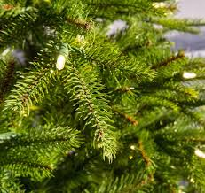 7ft Pre Lit Christmas Tree by 6 5ft Pre Lit Weeping Spruce Feel Real Artificial Christmas Tree