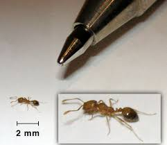 Flying Ants In Bathroom Window by How To Get Rid Of The Ants In Your Home Step By Step
