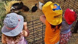 Top 10 Places For Families | Holland.org Farm Fun At Critter Barn In Zeeland Kzookids 2017 Ball Charlottesville Albemarle Spca Mrs Johons Kindergarten Baby Animals The Setchingittotravel Amazoncom Nature Bound Bug Catcher Habitat For News Molly Wattanasintham Twitter See Whats New Summer Fox17 Cuccis Queer Pride Edition Kremwerk Timbre