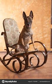 Dog On The Rocking Chair — Stock Photo © Logdog7 #141481640 These Elder Dogs Are Missing Someone From The Rocking Chair Favogram Puppy Dog In Tadley Hampshire Gumtree On A Stock Photo Download Image Now Istock Vintage Grandpa Man Wdog Pipe Rocking Chair Tirement Fund Bank Taking Akc Trick To The Next Level Top Notch Toys Miniature Schnauzer Wooden Lessons From Part Two Mothering Spirit Whats A Good Rocking Chair Quora Hd Welcome Are Love Puppies Lovers
