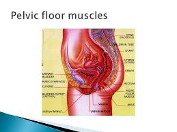 Pelvic Floor Muscle Training by Pelvic Floor Muscle Training The Role Of General Exercise Ppt
