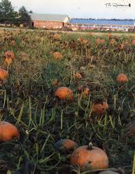 Soaking Pumpkin Seeds Before Planting by Pumpkin Seed Cheese The Rawtarian