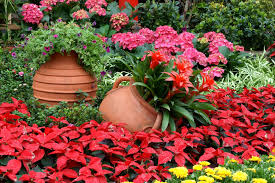 If Your Garden Has Mostly Red Yellow And Orange Flowers It Is
