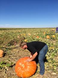 Pumpkin Patch Oklahoma 2015 by Pumpkin Patch The Chanhandle