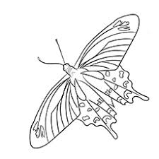 Crimson Rose Swallowtail Butterfly Coloring Page