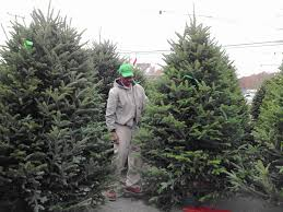 Canaan Fir Christmas Tree Needle Retention by Find Your Perfect Christmas Tree At Cut And Choose Countryside