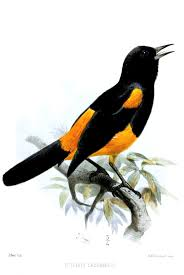 100 J Mountain St Lucia Saint Oriole Wikipedia