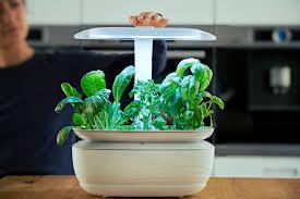 kräuter in der küche züchten indoor gardening liegt im