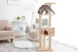 alles über katzenrassen katzenzubehör und katzengeschenke