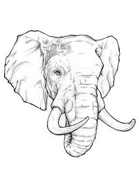 Medium Size Of Coloring Pagesgraceful Elephant Head Drawing Pencil Sketch Pages Exquisite
