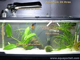poisson combattant aquarium alimentation photos