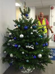 Christmas Trees Types Uk by Real Christmas Trees In Your Office Look U0026 Smell Wonderful