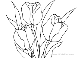 Coloriage Fleurs Collection Page De La Tulipe Image Vectorielle