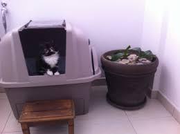 avis sur maison de toilette smartsift auto nettoyante pour chat
