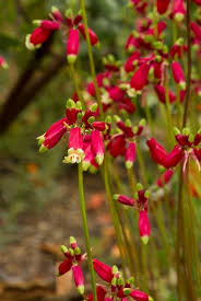 18 flowering bulbs for your garden garden design
