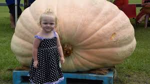 Largest Pumpkin Contest Winners by Giant Pumpkins Descend On Kyogle For Annual Weigh Off Photos