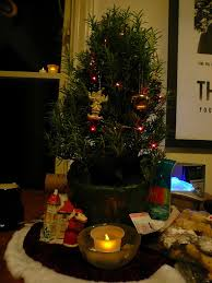Xmas Tree Waterer by Learn About Rosemary Christmas Tree Plants U2013 Keeping A Rosemary