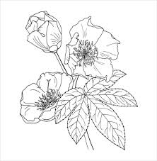 Buttercup Flower Coloring Page PDF Free Download