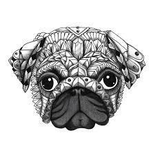 Ornate Pug From The Upcoming Decorative Dogs Coloring Book Get Free Printable Pages