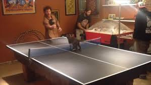Cat Tries To Interrupt Ping Pong Game