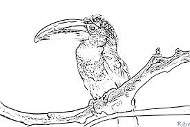 Index Of Maintoucan Coloriage