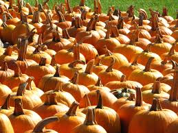 Pumpkin Patch Tacoma Wa by The Monster List Of Family Friendly Halloween Events Puget Sound