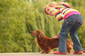 Do Wirehaired Vizslas Shed by 20 Breeds Of Small Dogs That Are So Good With Children