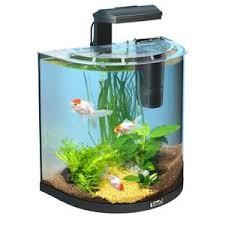 vente de poisson d aquarium pas cher 28 images achat aquarium