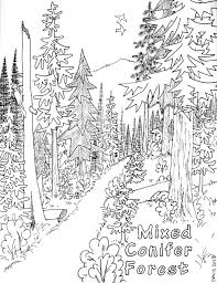 Exquisite Design Forest Coloring Pages Coniferous Page For Kids