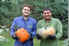 Pumpkin Picking Maine by Harvesting The Season U0027s Pumpkins The Martha Stewart Blog