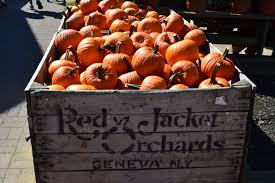 Pumpkin Picking Nj Colts Neck by Delicious Orchards Apple Fest 2012