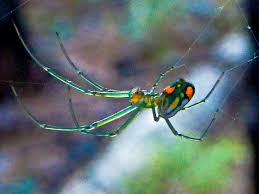 Remains Of The Day Spiders by Orchard Spider Island Ecology Uncw 2015