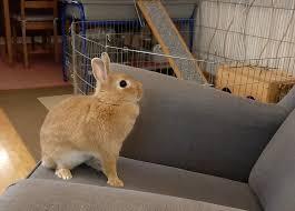 kaninchen tierheim leipzig