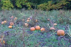 Pumpkin Patch And Hayrides Grand Rapids Mi by Photos Bethke Farms