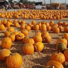 Pumpkin Patch Fresno Ca Hours by Dell U0027osso Family Farms 586 Photos U0026 377 Reviews Festivals