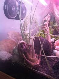 Do Hermit Crabs Shed Their Legs by Plants For Hermit Crabs The Happy Hermit Crab