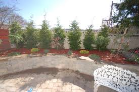 Leyland Cypress Christmas Tree by The Best Backyard Trees For Privacy Brooklyn Limestone
