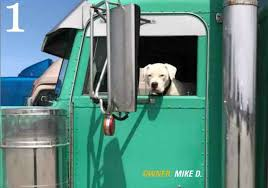 100 Road Dog Trucking Pets Own The In 2018 American Driver Jobs