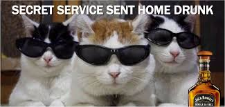 service cats current event cat of the day secret service plus cats