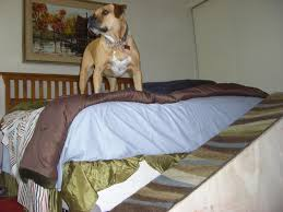 Pet Stairs For Tall Beds by Painted Dog Stairs For Bed Simple Diy Dog Stairs For Bed