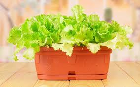 petits légumes sympatoches pour ton balcon jardiner en ville