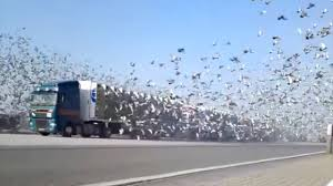 Truck Fails To Make Your Day And Tickle Your Funny Bone