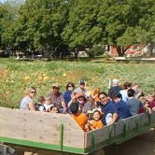 Bishop Pumpkin Patch Lincoln Ca by Hayrides At Bishop U0027s Pumpkin Farm In Wheatland California Farm