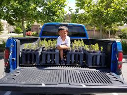 100 Seedling Truck Sac Tree Foundation On Twitter Every Fall We Harvest Native