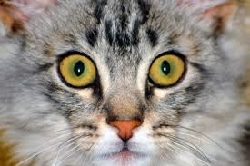 signs of worms in cats lung worms in cats causes treatments and prevention