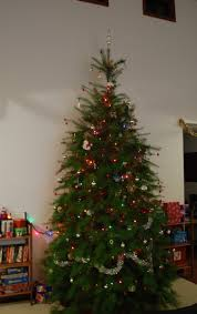 Xmas Tree Waterer by Christmas Tree Watering System Aaron Eiche