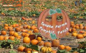 Tanaka Farms Pumpkin Patch by Mommy Fearist U0027s Guide To So Cal Events For The Weekend Of Oct 6 8